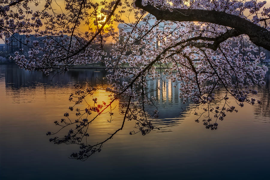 Sunrise At The Thomas Jefferson Memorial Photograph  - Sunrise At The Thomas Jefferson Memorial Fine Art Print