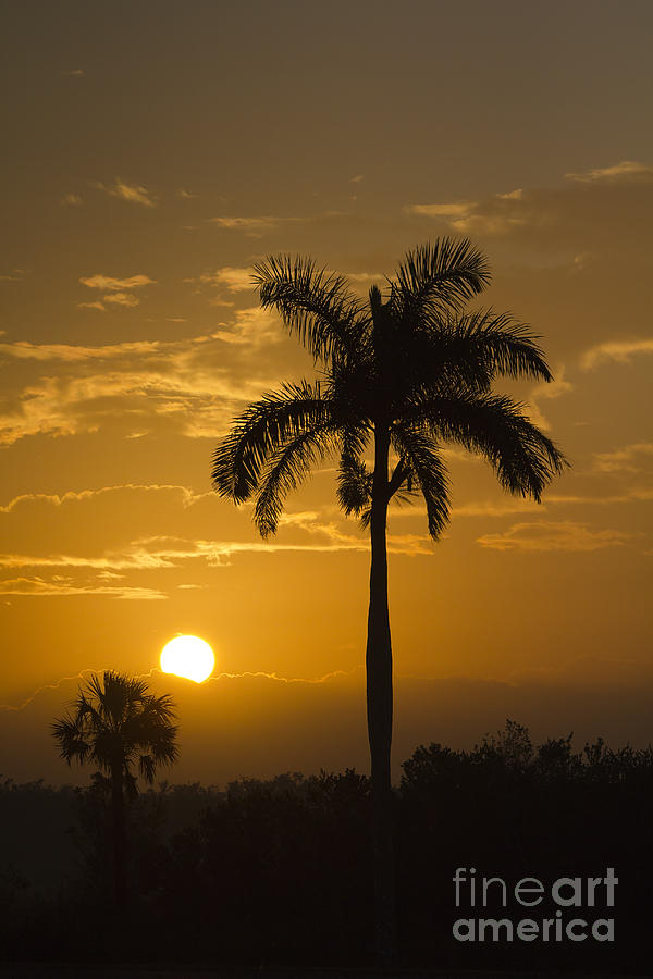 Sunrise In The Everglades Photograph  - Sunrise In The Everglades Fine Art Print