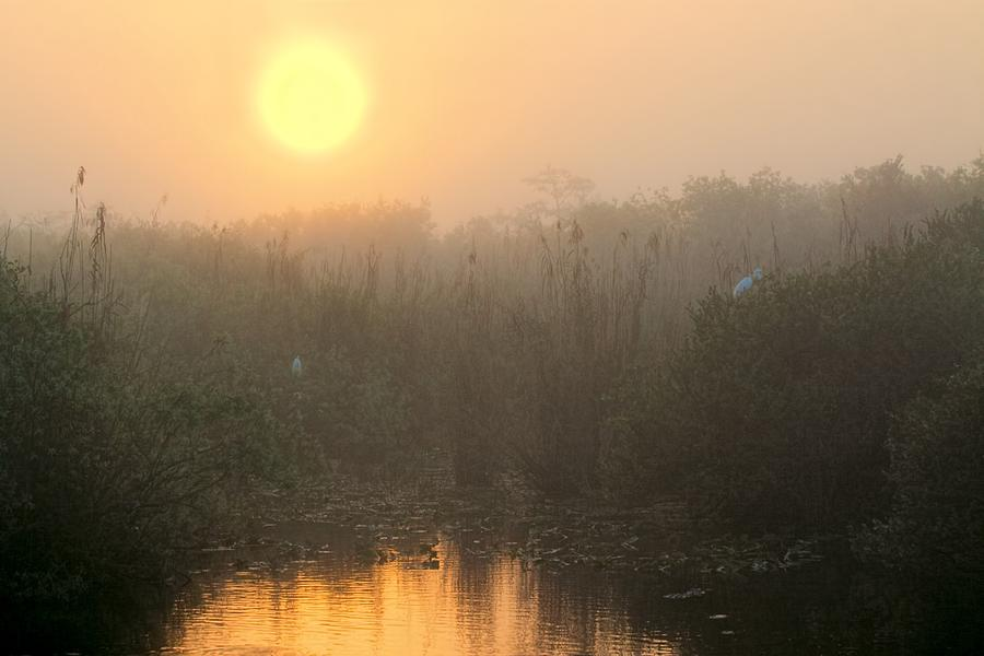 Sunrise In The Everglades Photograph