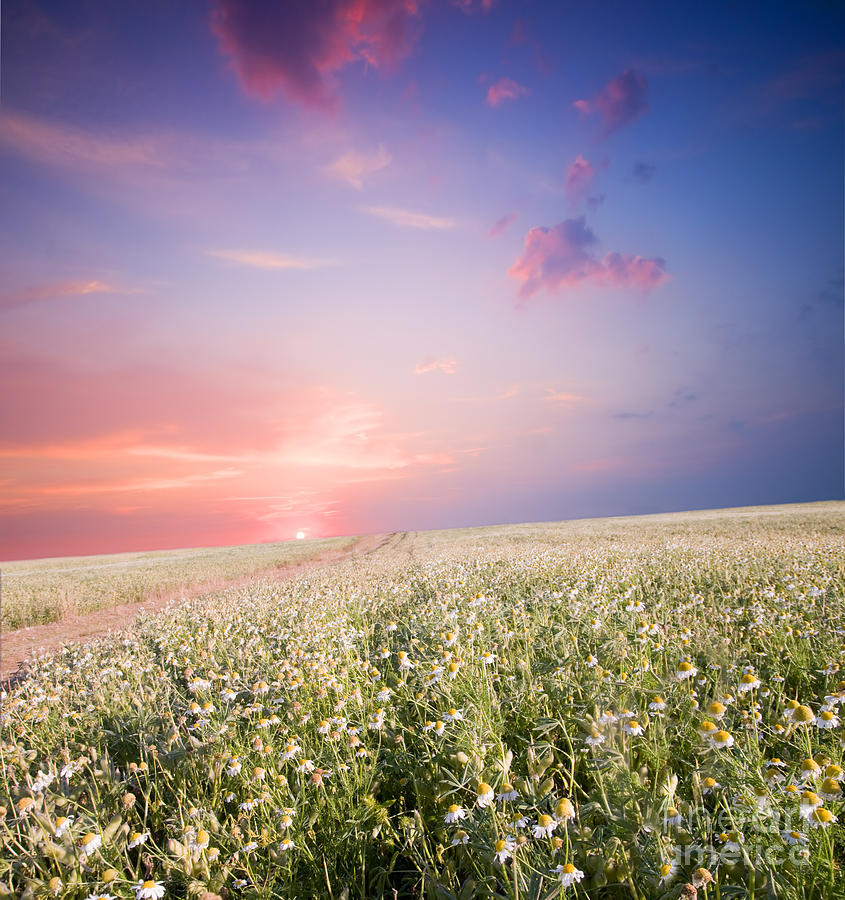 Sunrise Over Flower Land Photograph  - Sunrise Over Flower Land Fine Art Print