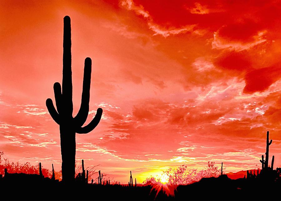 American Photograph - Sunrise Saguaro National Park by Bob and Nadine Johnston