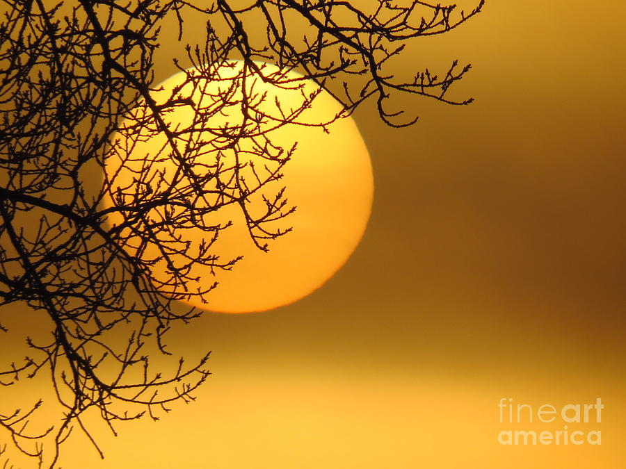 Sunrise Through The Fog Photograph  - Sunrise Through The Fog Fine Art Print