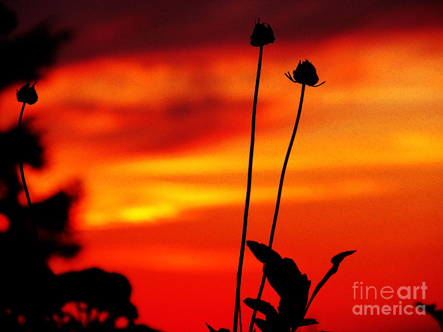 Sunset 365 20 Photograph