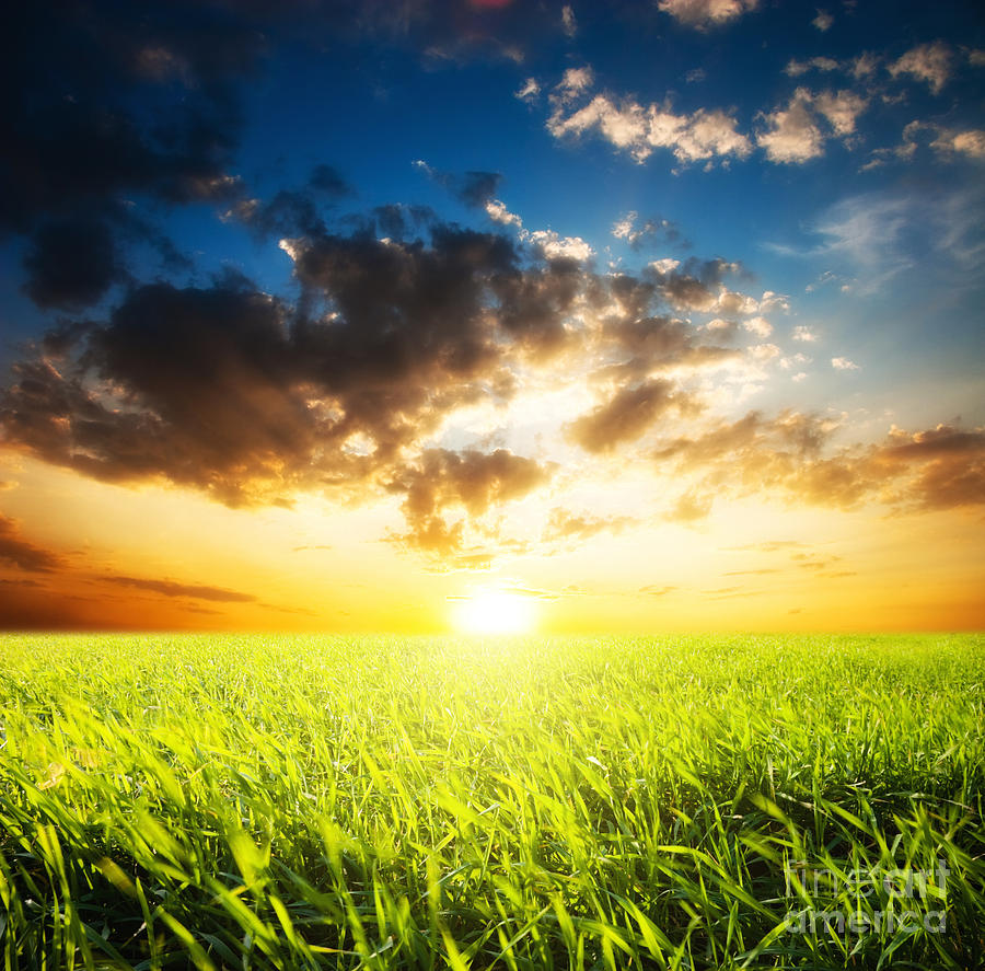 Sunset And Field Of Grass Photograph