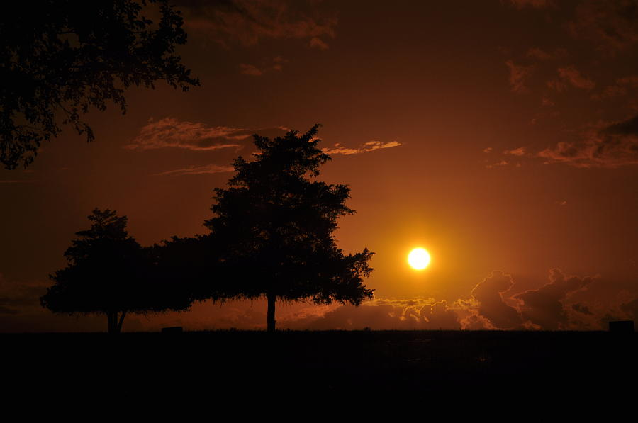 Sunset And Trees Photograph
