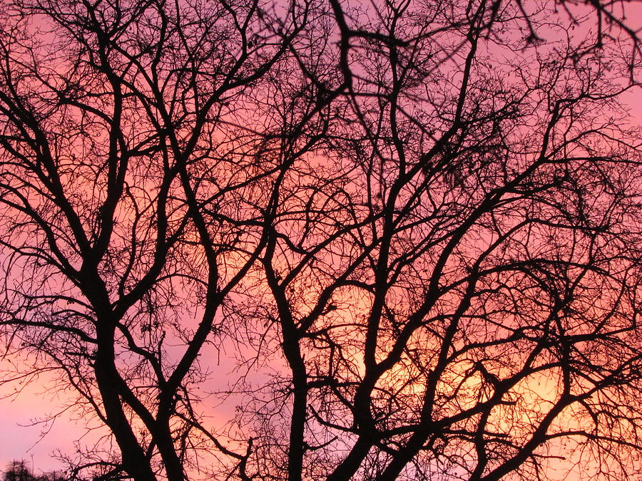 Sunset Behind The Trees Photograph