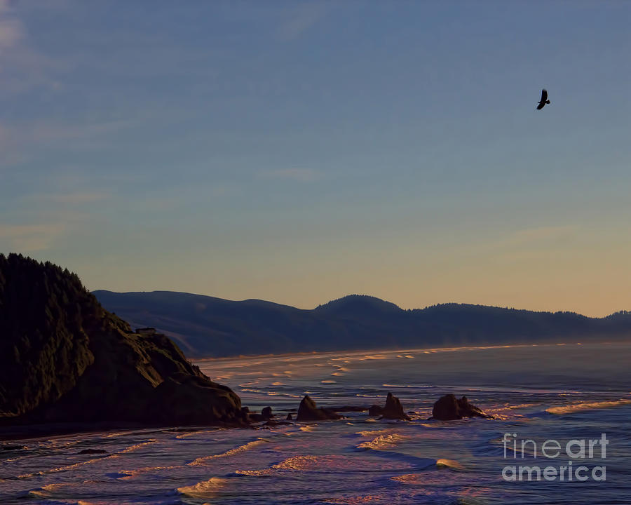 Sunset Eagle Photograph  - Sunset Eagle Fine Art Print