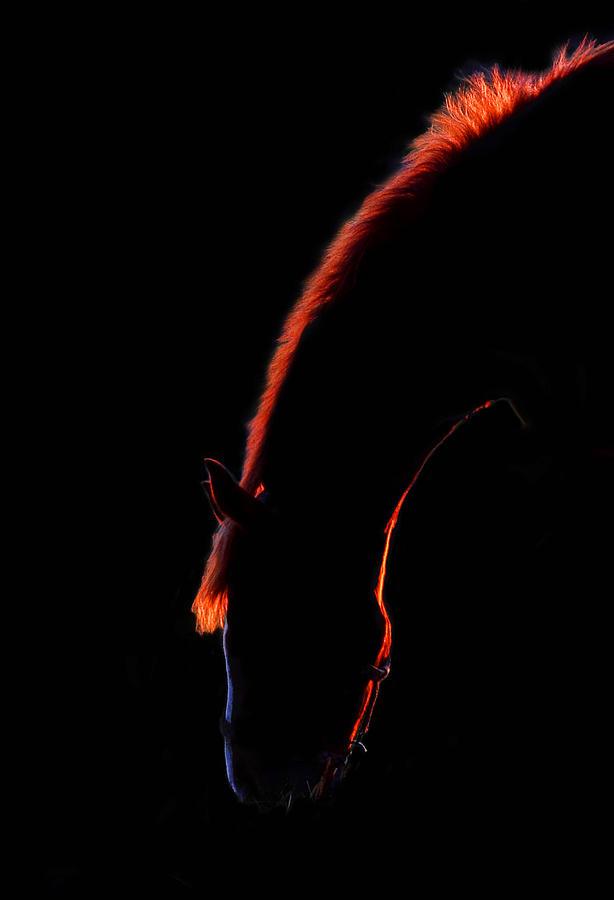 Sunset Horse Photograph