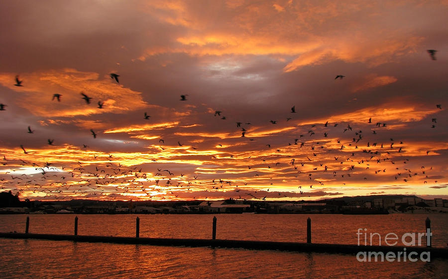 Sunset In Tauranga New Zealand Photograph