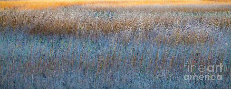 Sunset Marsh In Blue And Gold Photograph