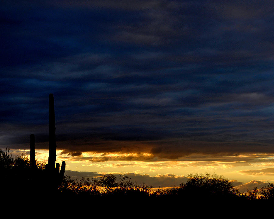 Sunset Over Sonoran Desert Photograph  - Sunset Over Sonoran Desert Fine Art Print