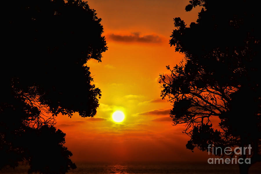 Sunset Silhouette By Diana Sainz Photograph