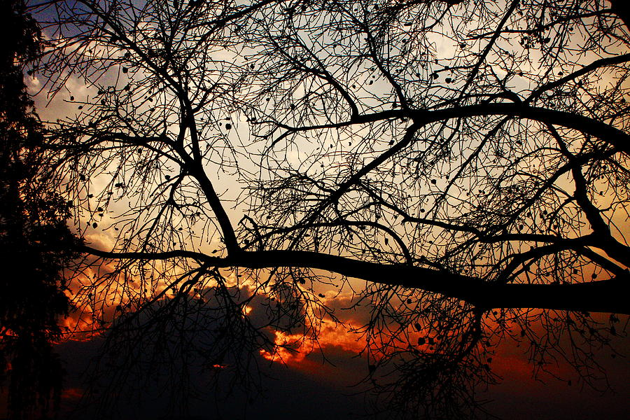 Sunset Through The Trees Photograph