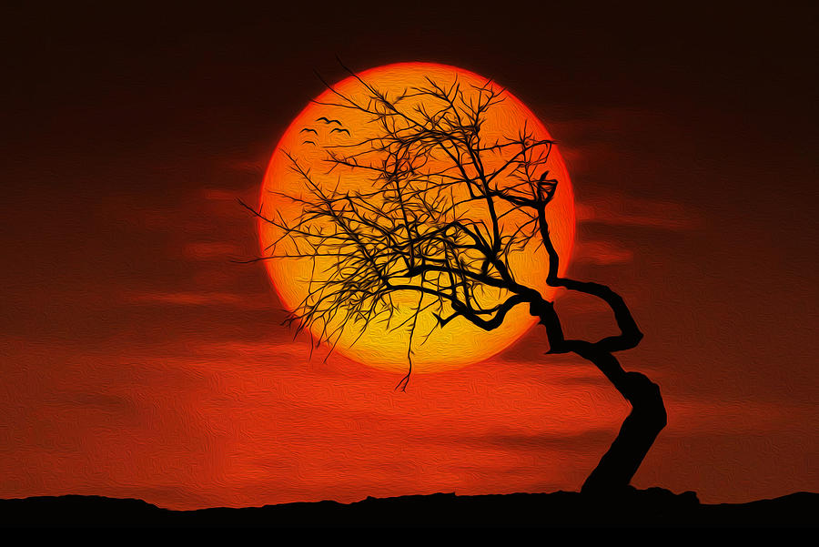 Sunset Tree Photograph By Bess Hamiti
