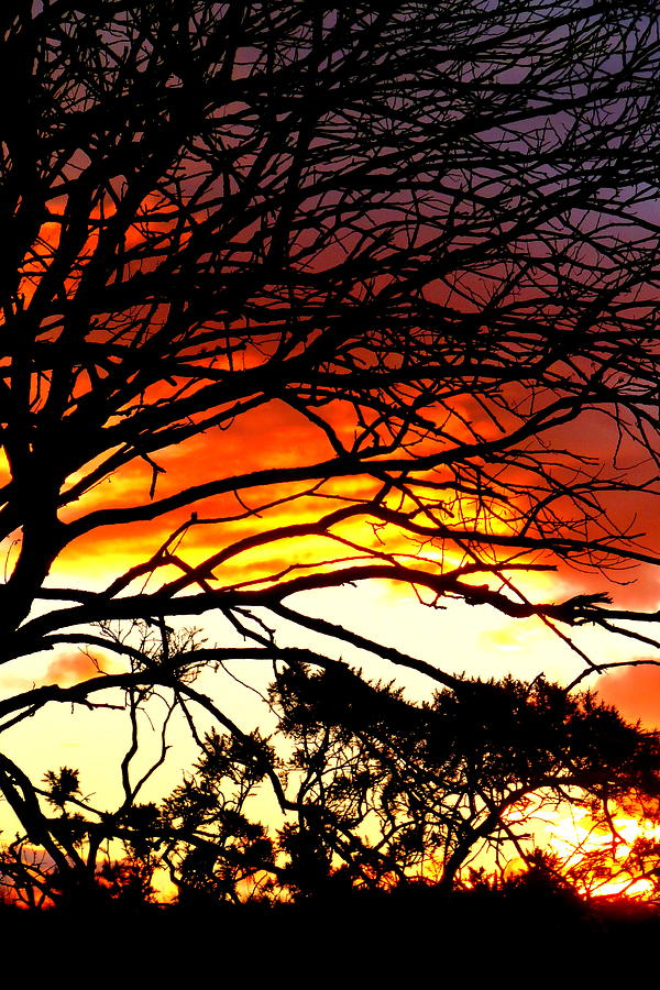 Sunset Tree Silhouette Photograph  - Sunset Tree Silhouette Fine Art Print