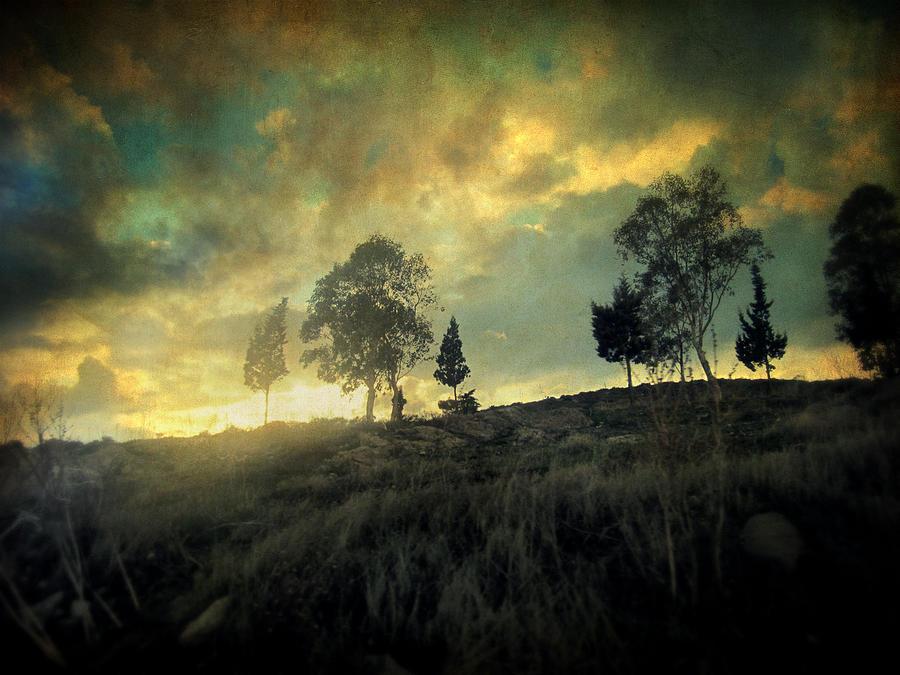 Nature Photograph - Sunset Trip II by Taylan Apukovska