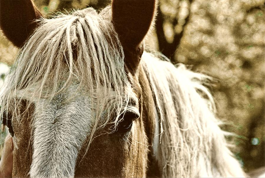 Horse Photograph - Sunshine by JAMART Photography