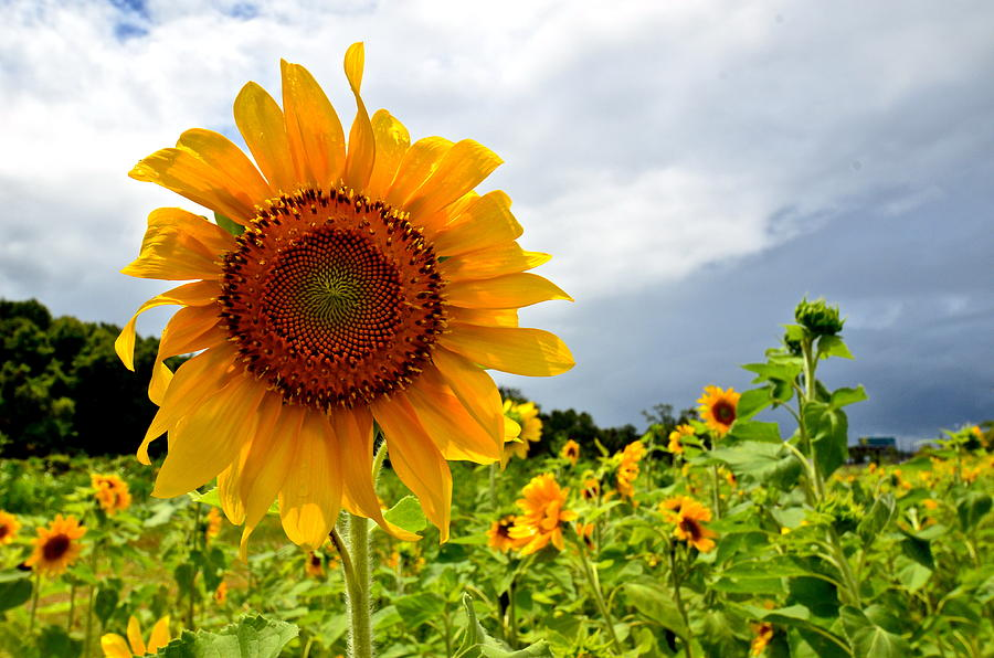 Sunshine On A Cloudy Day Photograph  - Sunshine On A Cloudy Day Fine Art Print