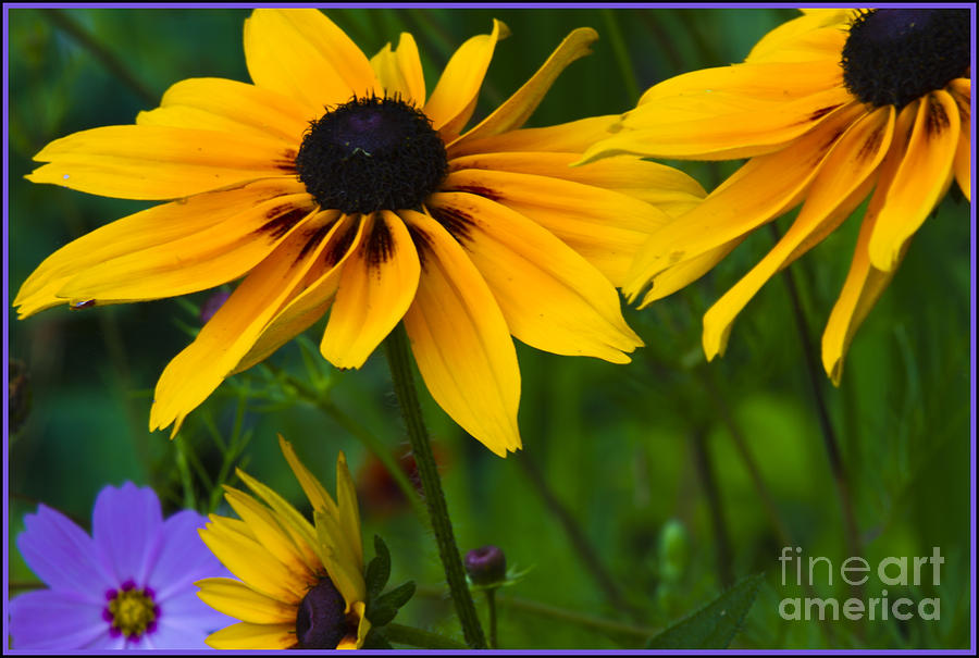 Sunshine Photograph  - Sunshine Fine Art Print