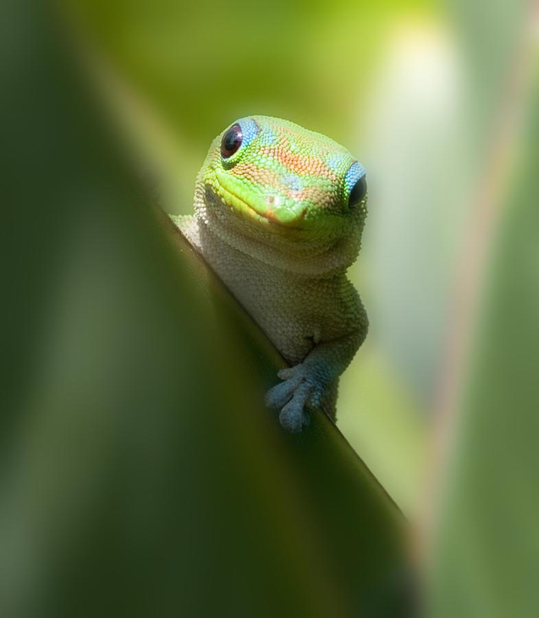 Gecko Photograph - Sup Homie by Richard Shelton