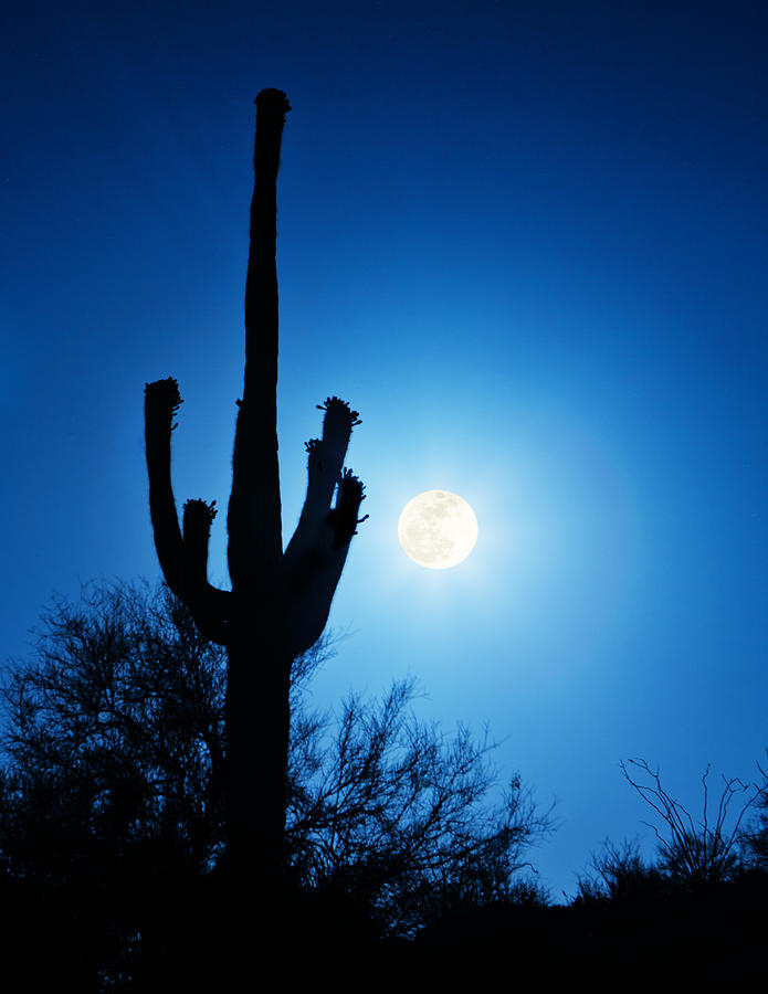 Super Full Moon With Saguaro Cactus In Phoenix Arizona Photograph