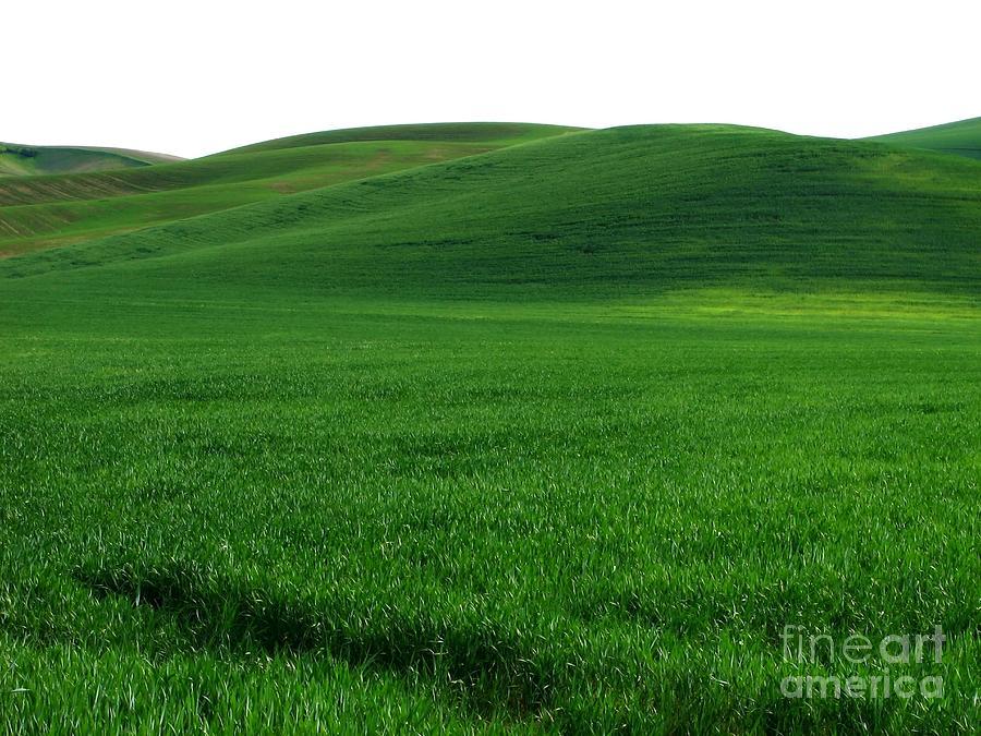 Super Greens Land Photograph