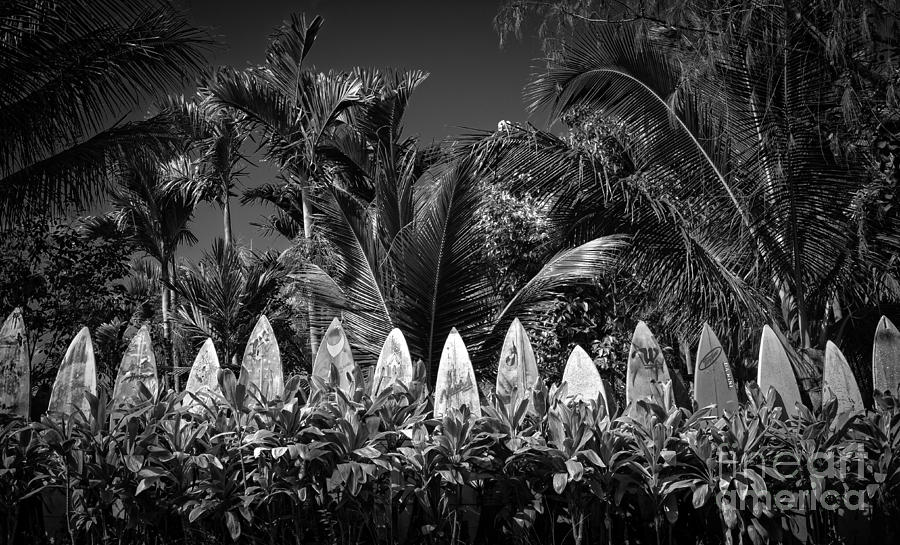 Hawaii Photograph - Surf Board Fence Maui Hawaii Black And White by Edward Fielding