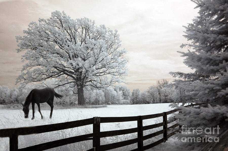 Beautiful Horse Photography Photograph - Surreal Dreamy Infrared Trees - Fantasy Infrared Horse Nature Landscape With Fence Post by Kathy Fornal