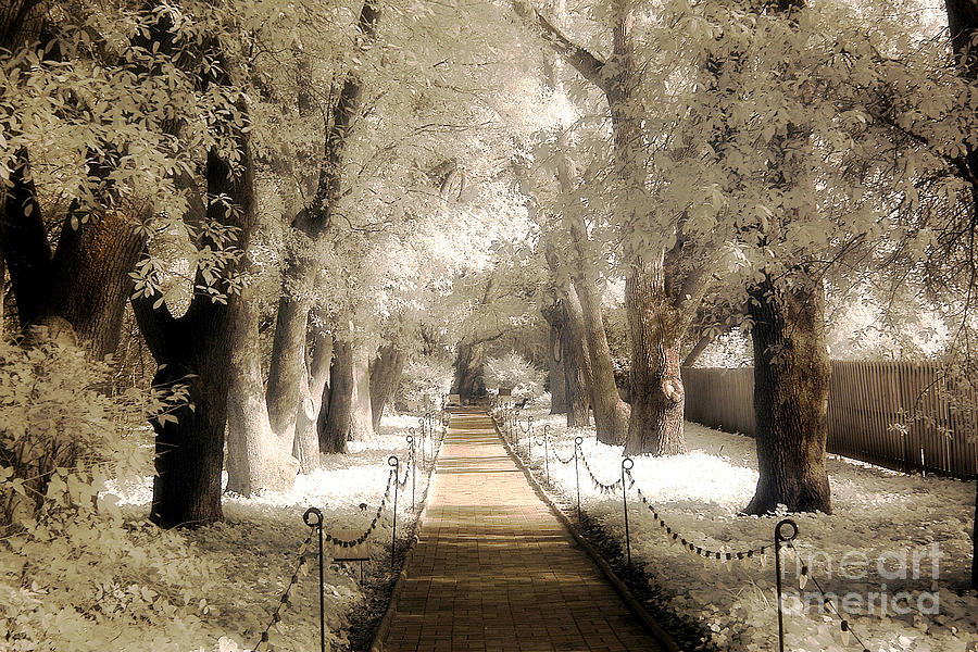 Surreal Dreamy Sepia Infrared Park Pathway  Photograph  - Surreal Dreamy Sepia Infrared Park Pathway  Fine Art Print