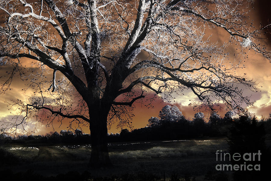 Surreal Fantasy Gothic Trees Nature Sunset Photograph  - Surreal Fantasy Gothic Trees Nature Sunset Fine Art Print