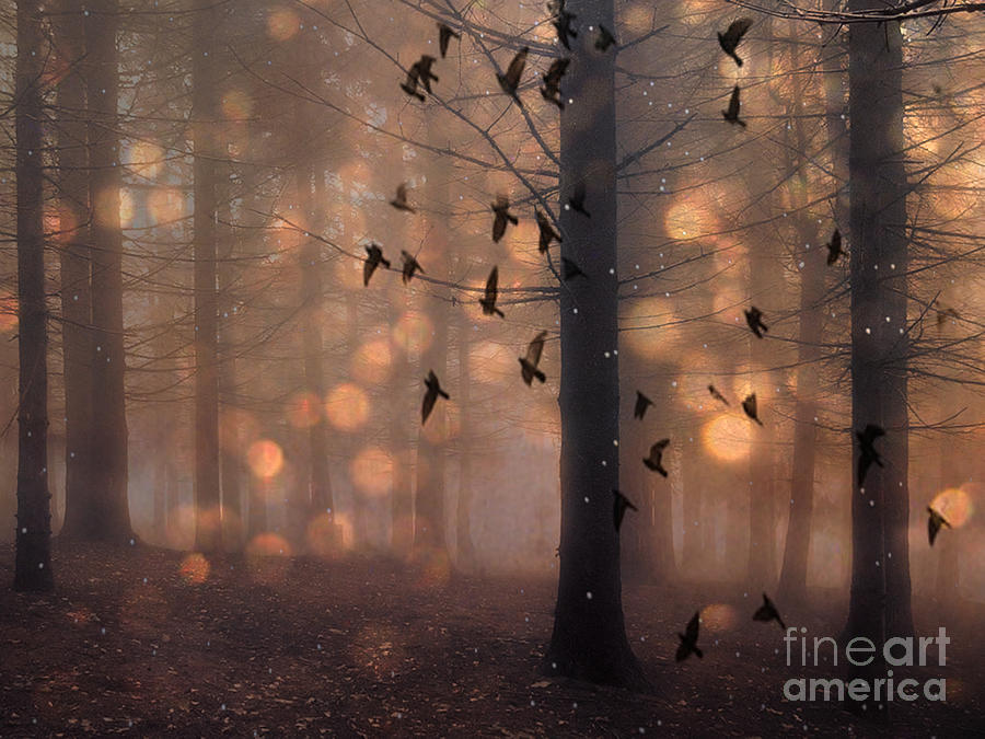 Surreal Fantasy Haunting Woodlands And Birds Photograph