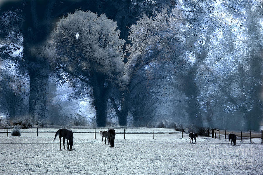 Surreal Fantasy Nature Horses Blue Landscape Photograph  - Surreal Fantasy Nature Horses Blue Landscape Fine Art Print