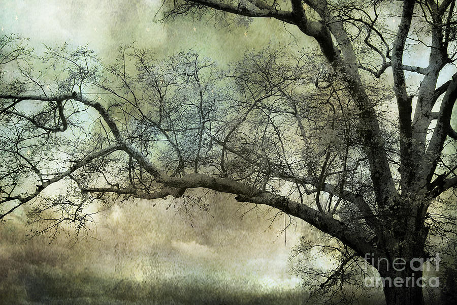 Surreal Gothic Dreamy Trees Nature Landscape Photograph