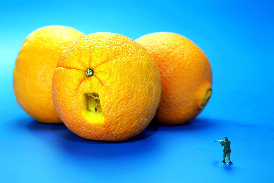 Surrender Mr. Oranges Little People On Food Photograph  - Surrender Mr. Oranges Little People On Food Fine Art Print