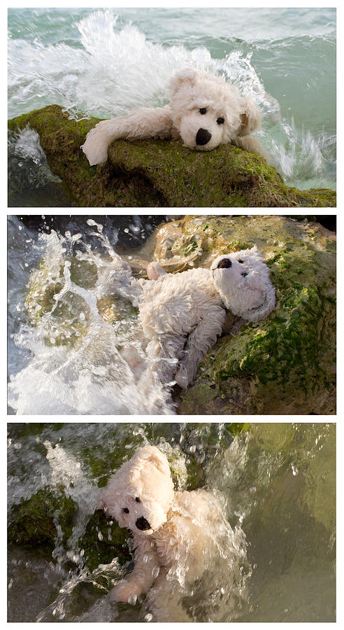 Bear Photograph - Surviving Lifes Waves by William Patrick