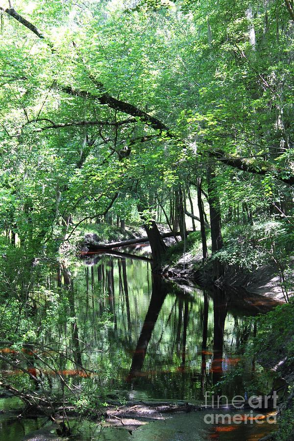 Suwanee River Reflections Photograph