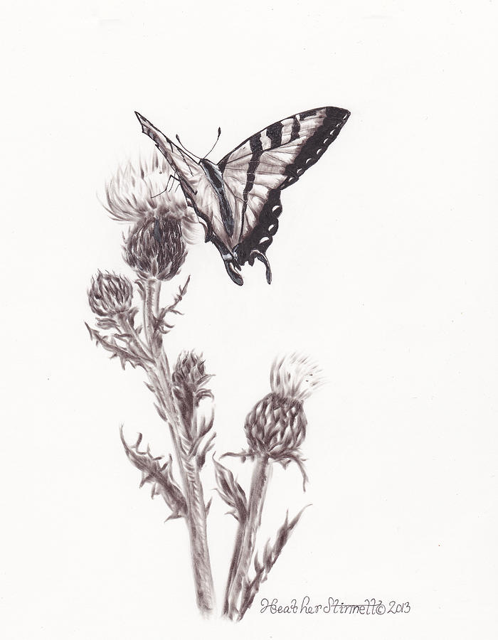 Swallowtail Butterfly Drawing By Heather Stinnett