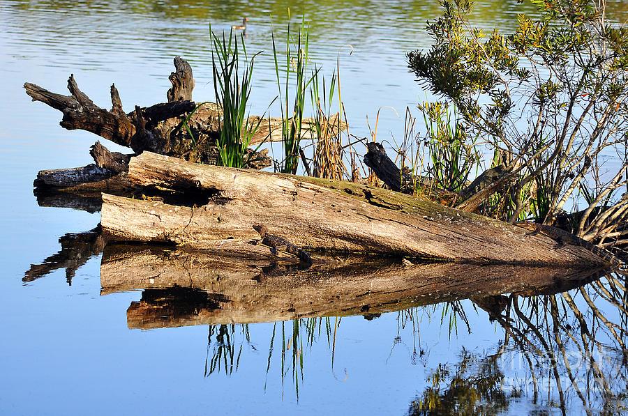 Swamp Scene Photograph
