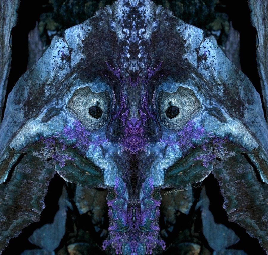 Swampkin Photograph