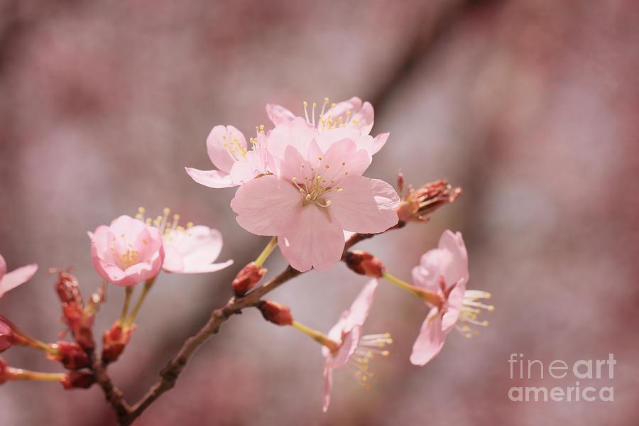Sweet Blossom Photograph