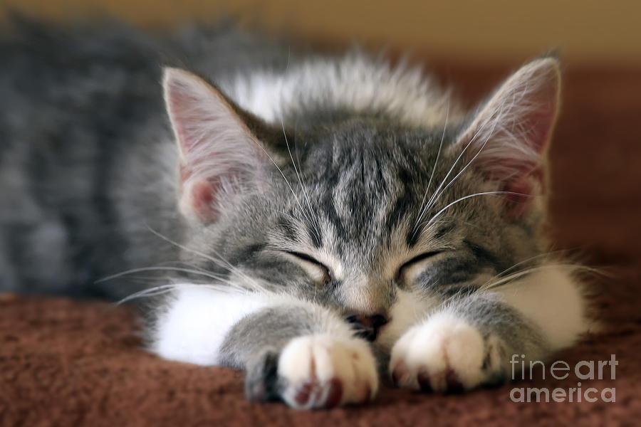 Animal Photograph - Sweet Dreams by Teresa Zieba