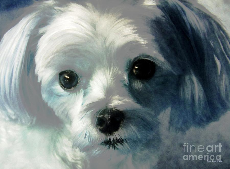 Sweet Maltese Photograph  - Sweet Maltese Fine Art Print