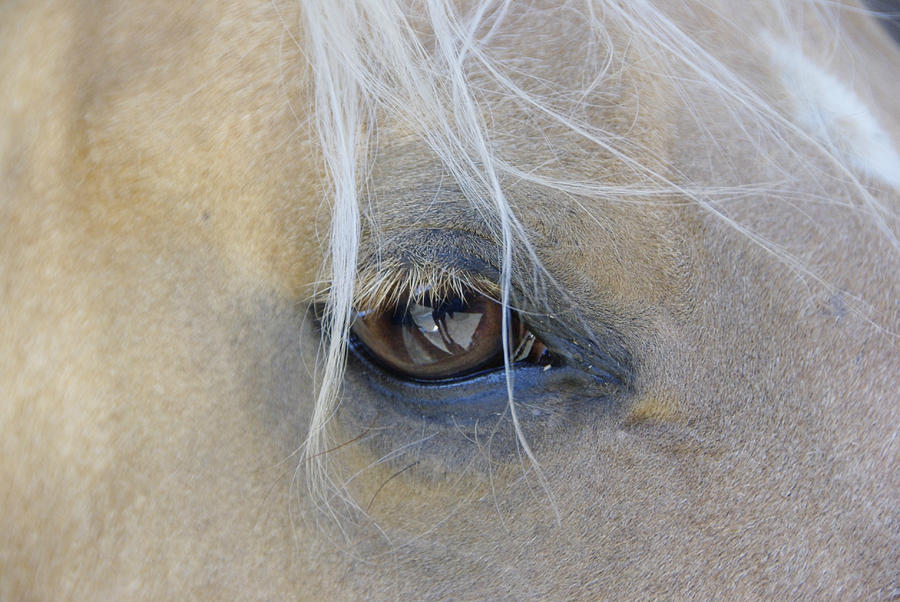 Eyes Photograph - Sweet Soul by Marilyn Wilson