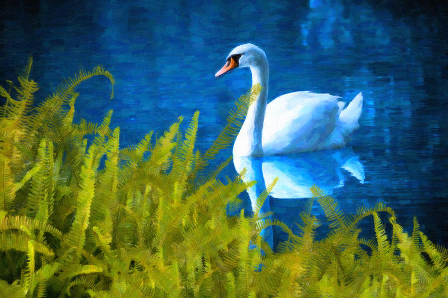 Swimming Swan And Ferns Photograph  - Swimming Swan And Ferns Fine Art Print