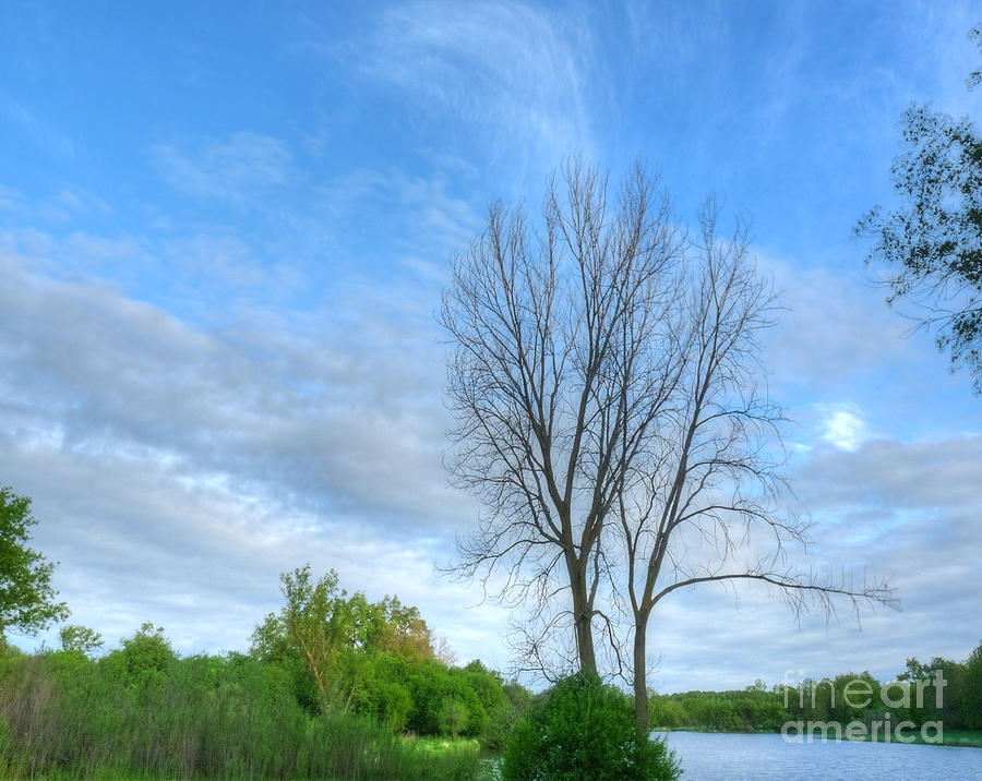 Swirly Sky And Tree Photograph