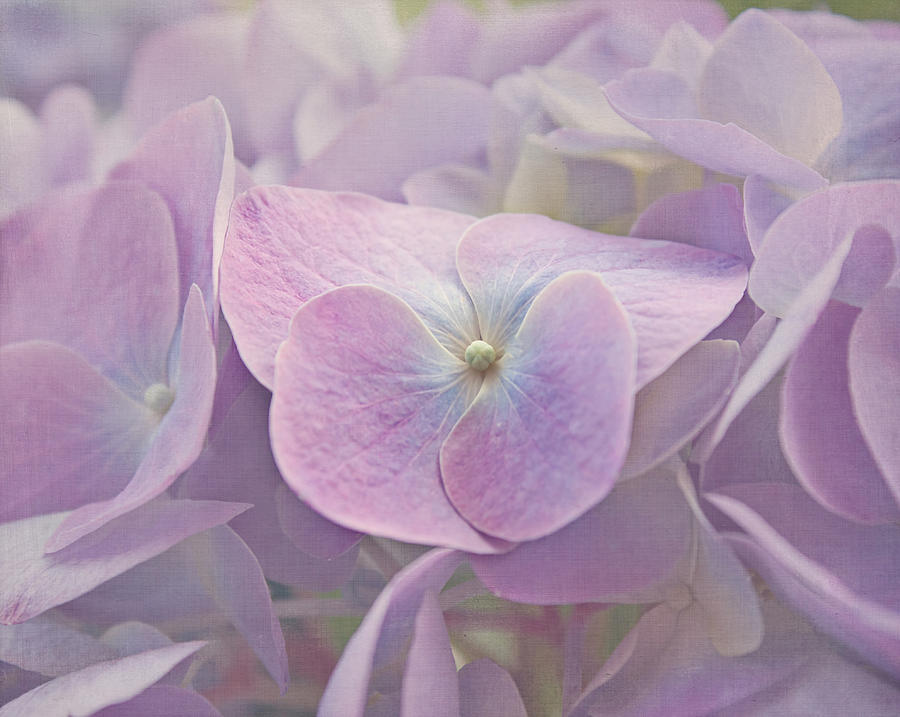 Symphony In Purple Photograph