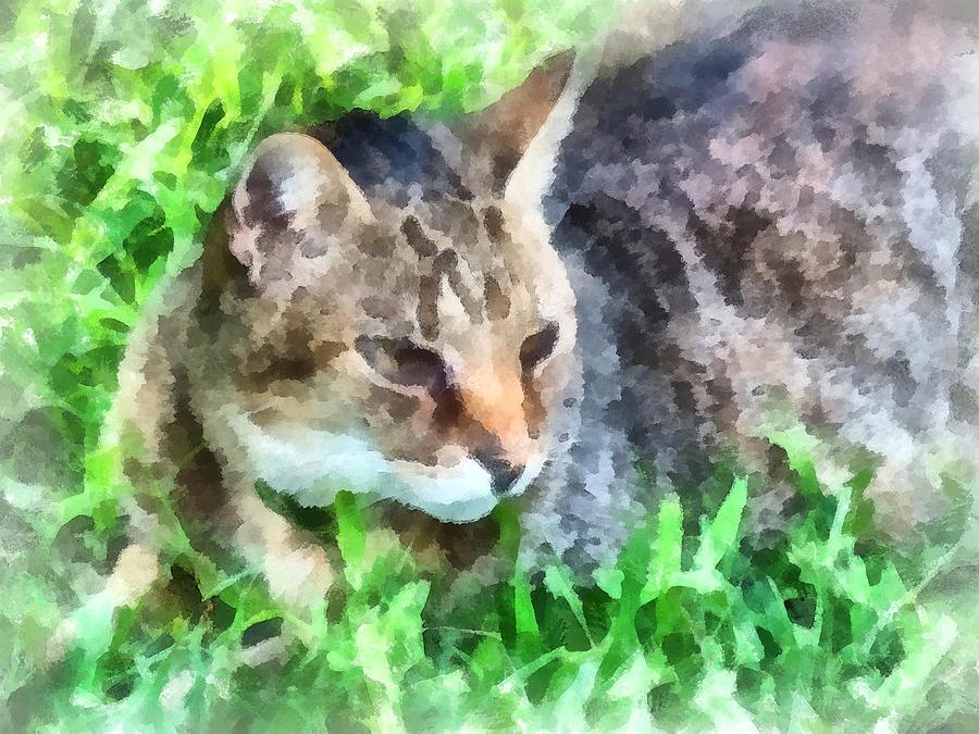 Tabby Cat Closeup Photograph