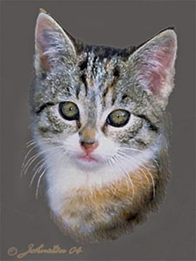 Tabby  Kitten Painting