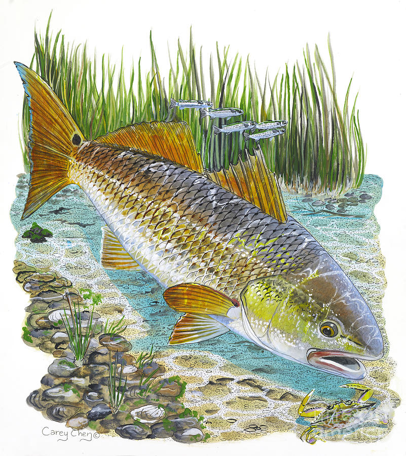 Redfish Painting - Tailing Red by Carey Chen