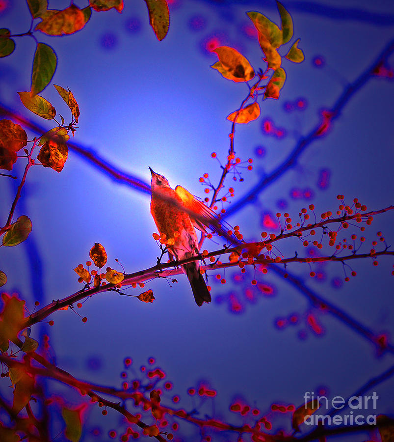 Taking Flight By Jrr Photograph  - Taking Flight By Jrr Fine Art Print